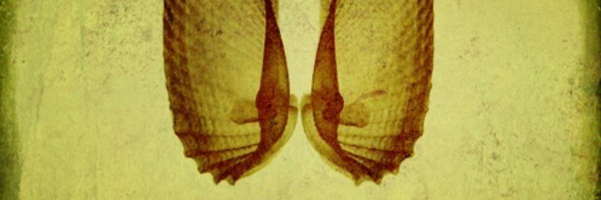 Logo headphaune